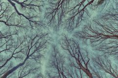 Tree top. Photo isy taken in the afternoon in one national park in Serbia Stock Photos