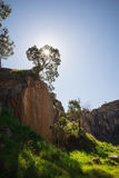 A tree on top of a rock climbing wall in Greenmount National par. K, Western Australia stock photos