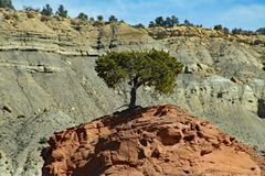 Lonely Tree in Utah stock photography