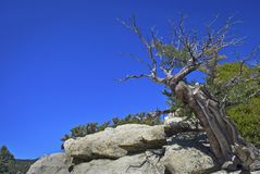 Tree Top San Jacinto Stock Photos