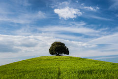 Tree on the top of small green hill with blue sky Royalty Free Stock Image