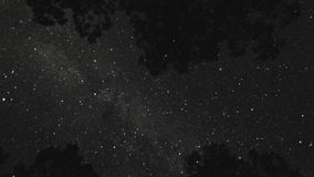 Tree top starry night sky timelapse. Video of tree top starry night sky timelapse stock footage