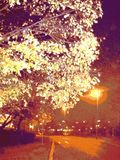 Tree top and street light with streetview to city royalty free stock image