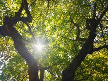 Tree top in the sun Royalty Free Stock Image