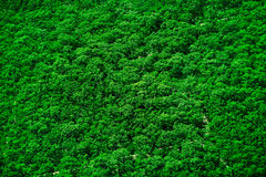Tree top texture Royalty Free Stock Photography