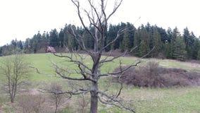 Tree stock video