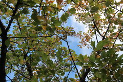Tree top view autumn up royalty free stock photography