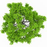 Tree top view Royalty Free Stock Image