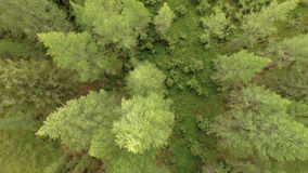 Tree Top View. Top view of the tops of the trees, flying over the river stock footage