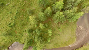 Tree Top View. Top view of the tops of the trees, flying over the river stock video