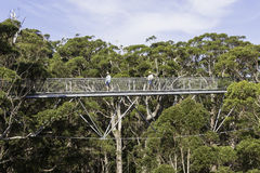 Free Tree Top Walk Stock Image - 74367661