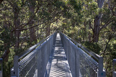 Tree Top Walk bridge in the Valley of the Giants Stock Photos