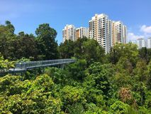 Tree top walk Southern Ridges trail in Singapore Royalty Free Stock Image