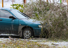 Tree top which fell to car in winter Royalty Free Stock Images