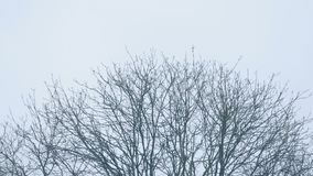 Tree top in winter. Bare tree top in the winter sway in breeze stock video footage