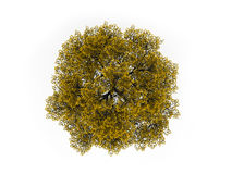 Tree on top in yellow color isolated Royalty Free Stock Photos