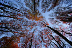 TREE TOPS Stock Photos