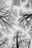 Tree-tops Royalty-vrije Stock Afbeelding