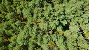Tree tops from above. From above aerial shot taken with drone of evergreen tree tops making pattern of forest in rural area in summertime stock video footage