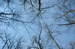 Tree tops against the sky. Spring, black. Tree tops against the sky. Spring Sunny day stock images