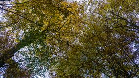 Tree tops in autumn. Forest stock images
