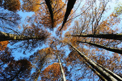 Tree tops in autumn Royalty Free Stock Photography