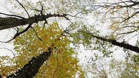 Tree-Tops stock video footage