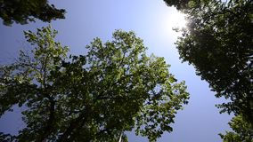 Tree tops on the blue sky. HD CRANE: Beautiful tree tops on the bright blue skt and sun rays, wide angle stock footage