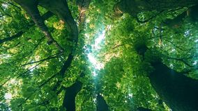 Tree tops Royalty Free Stock Images