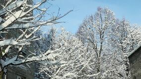 Tree tops covered with white snow. Bright winter sunlight shines through tree twigs covered with white fluffy snow against blue sky near old houses stock video footage