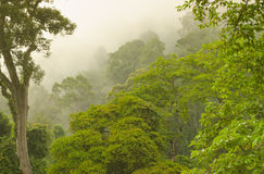 Tree tops and fog Stock Image
