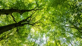 Tree tops in forest. Green tree tops in light flooded forest stock photography