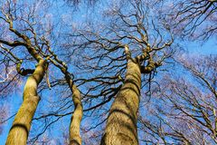Tree tops in the forest with blue sky Stock Photography