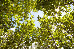 Tree tops. In the forest of Thailand on an beautiful day from tree tops royalty free stock photo