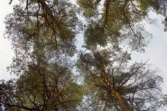 Tree tops II Stock Photos