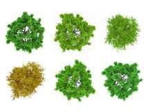 Tree tops isolated Stock Images