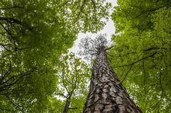 Tree tops - Nature green wood background. Forest trees leaves - tree tops - nature green wood background Stock Photo
