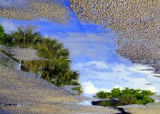 Reflection of Tree Tops in Puddle. After the rain a puddle shows the reflection of tree tops and blue sky Royalty Free Stock Image