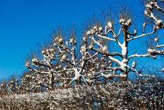 Tree tops in sky stock photography