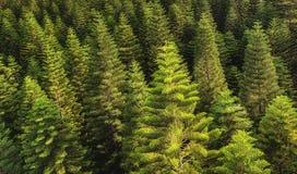 Tree tops texture Royalty Free Stock Photos
