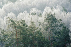 Tree tops in tonal perspective Stock Photos