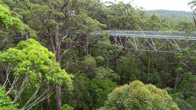 Tree tops walkway at Walpole Western Australia in autumn. Royalty Free Stock Images