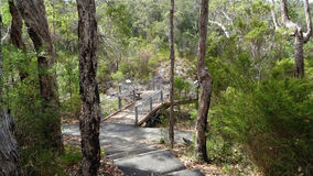 Tree tops walkway at Walpole Western Australia in autumn. Stock Photos