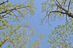 Tree-tops Royalty Free Stock Images