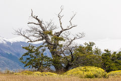 Tree in Torres del Paine National Park Royalty Free Stock Photos
