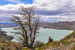 Tree, Torres del Paine National Park, Chile. A tree in front of a huge lake in the Torres del Paine National Park, Patagonia, Chile stock photo