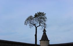 Tree and tower, fortress in Pskov Stock Photo