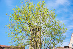 Tree and tower Royalty Free Stock Image