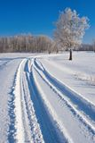 Tree and Tracks. A mid winter scene on prairie land royalty free stock photo