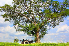 Tree with tractor truck Royalty Free Stock Images